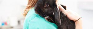 Black rabbit with vet